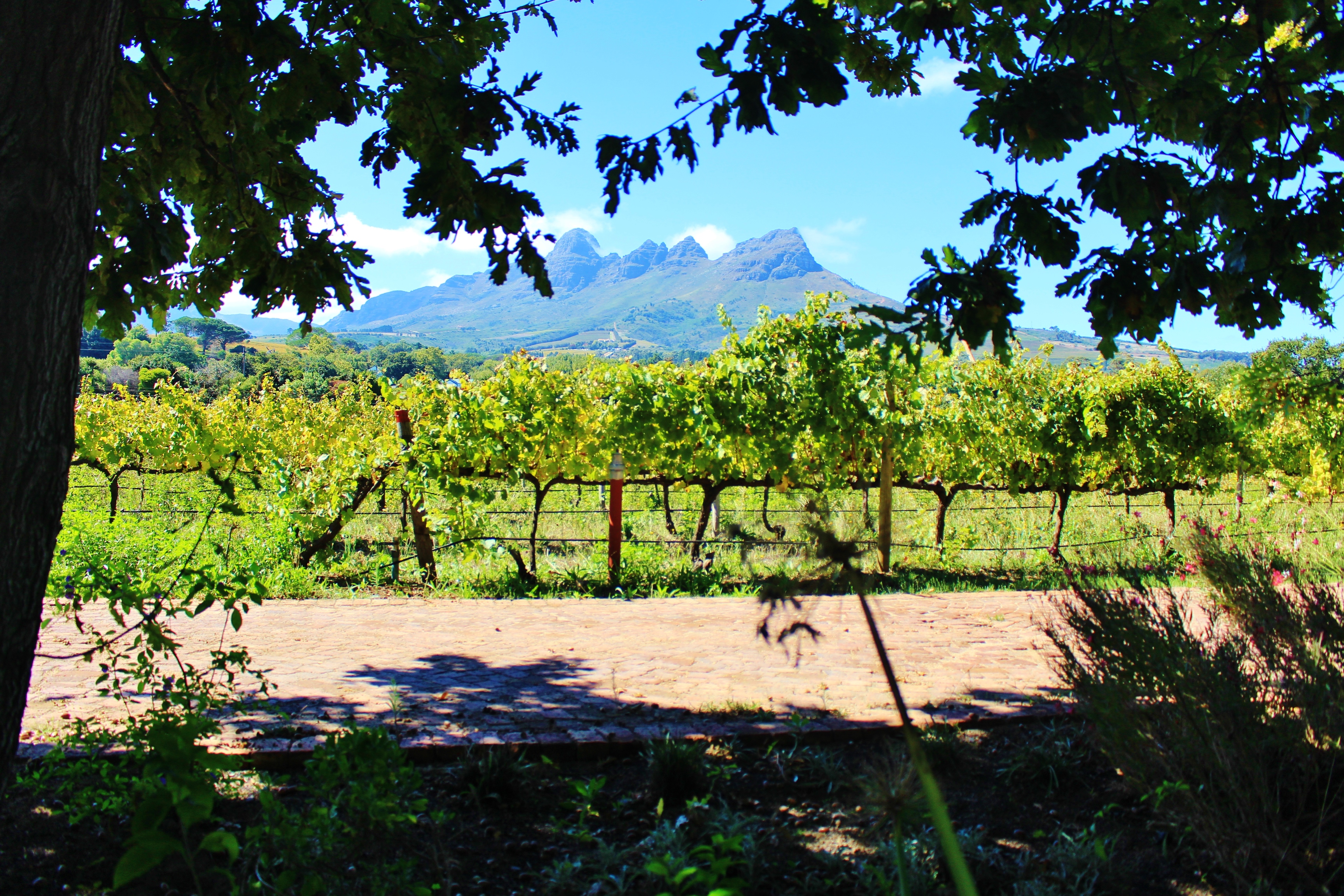 wine tasting in Cape Town Stellenbosch