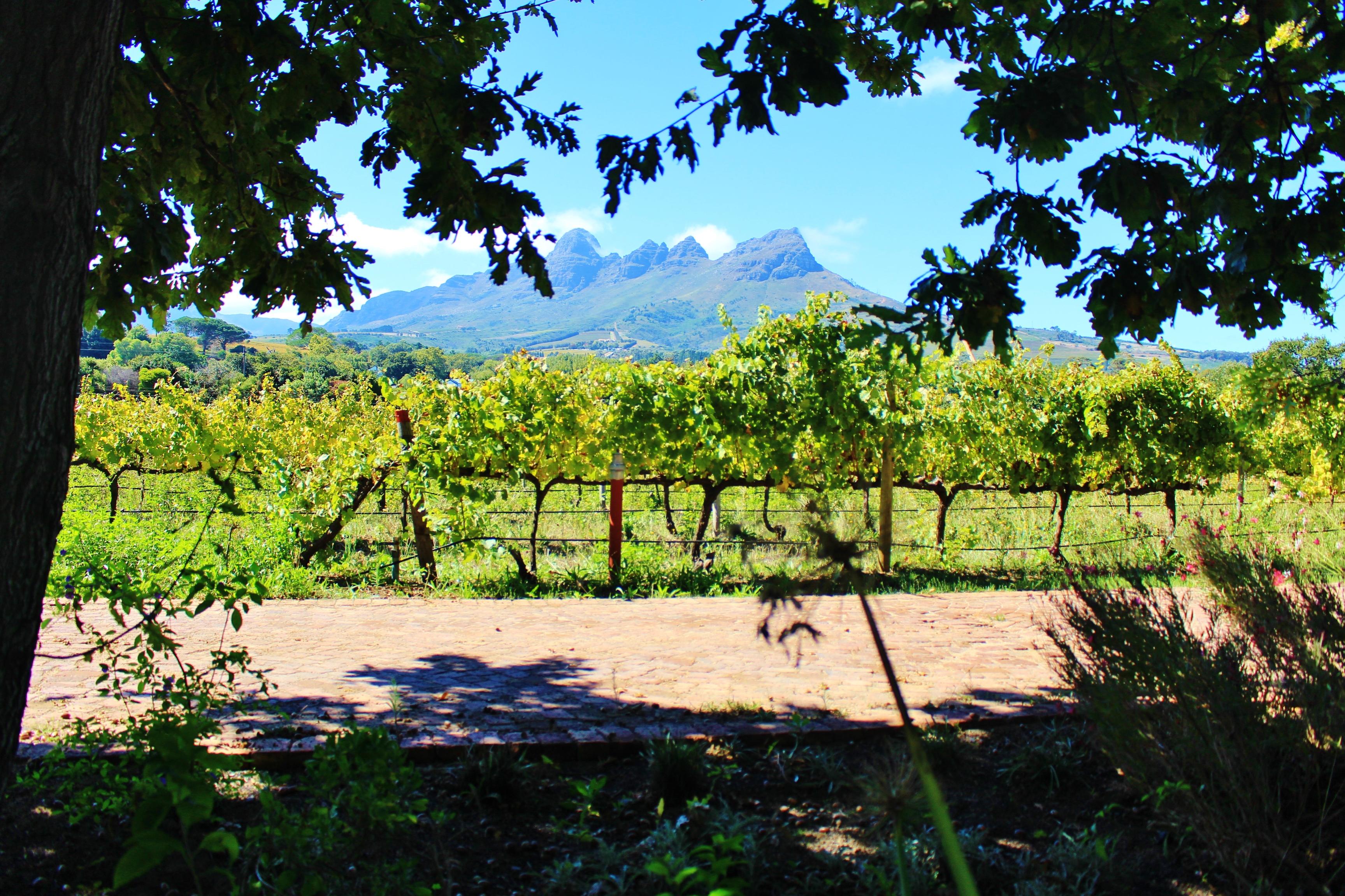 wine tasting in Cape Town Stellenbosch