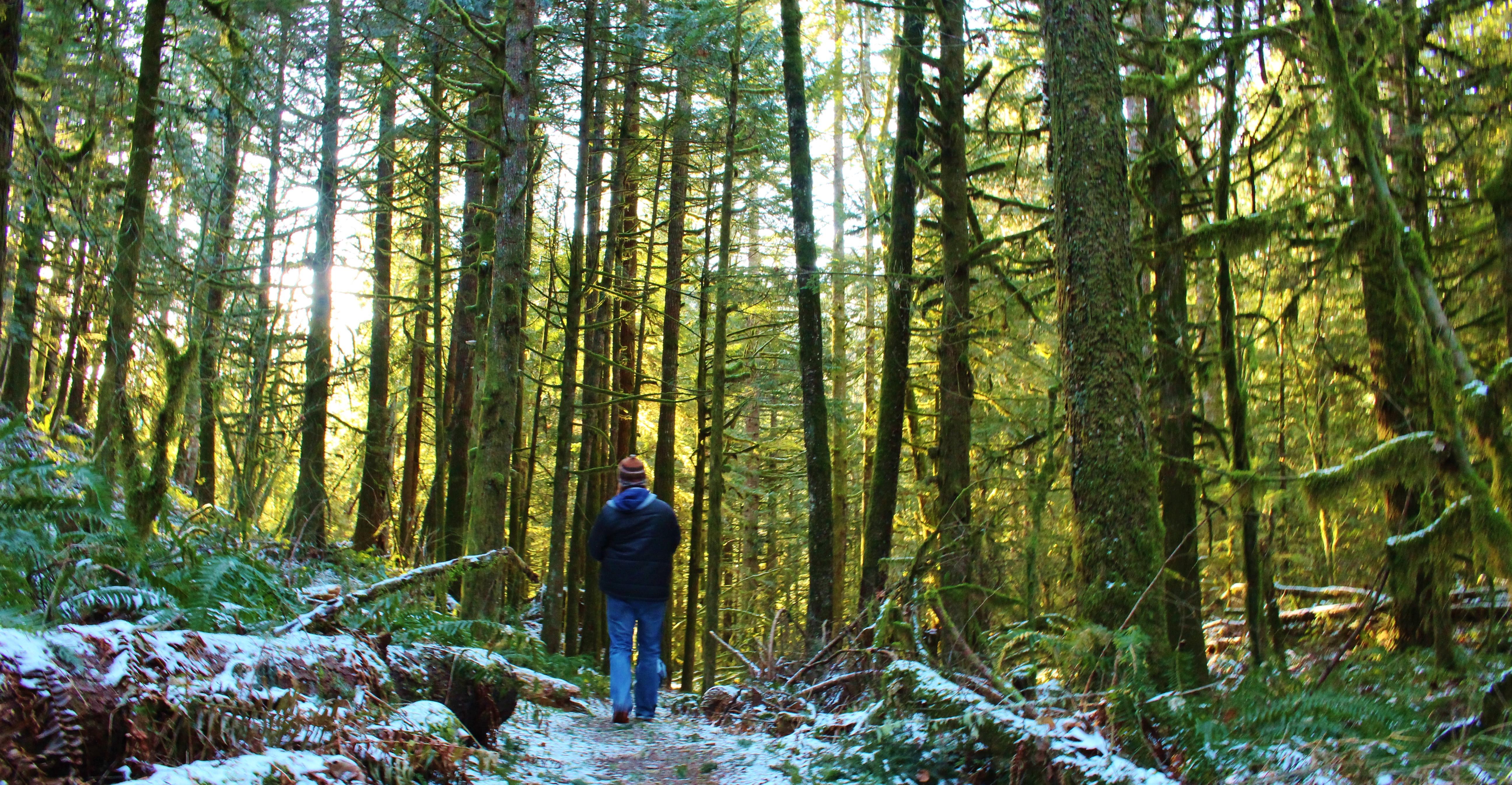 washington woods